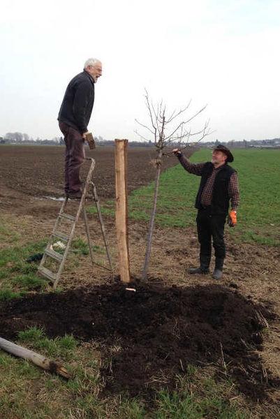 Baum-Pflanzung im Luchemer Feld in Langerwehe.