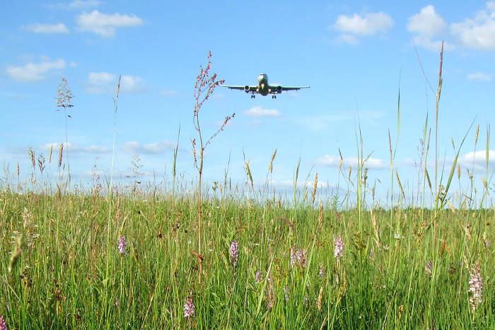 Ein Flugzeug im Landeanflug über der Wahner Heide bei Rösrath.