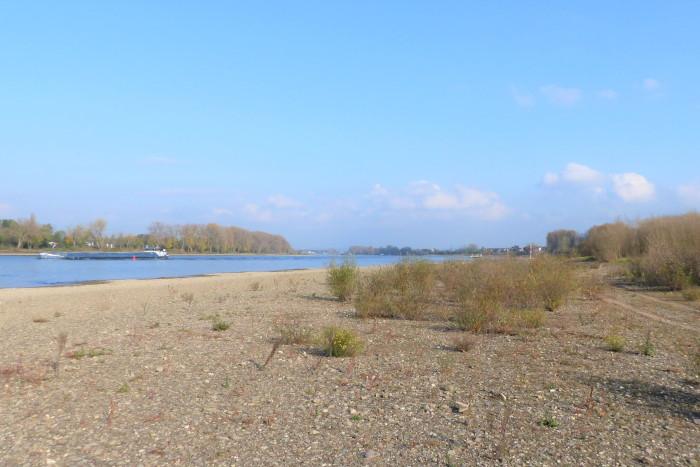 Die Langeler Aue am Rhein bei Köln Godorf.