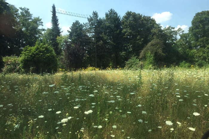 Durch BUND angelegte Blühwiese.
