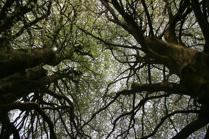 Bäume in der Stadt - wichtig für das Klima und die Lebensqualität.