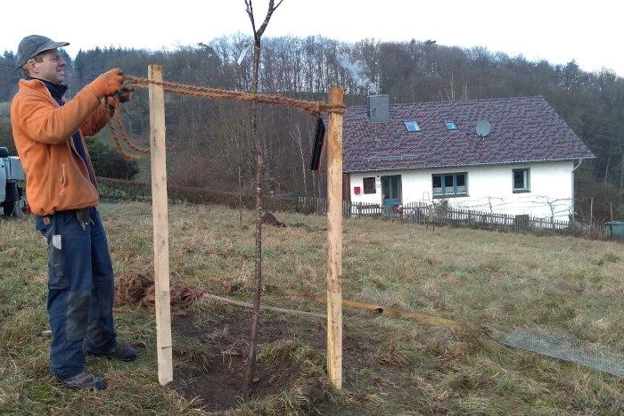 Neupflanzung von Obstbäumen auf der Wiese eines BUND Mitglieds in Windeck Rommen (Rhein-Sieg Kreis).